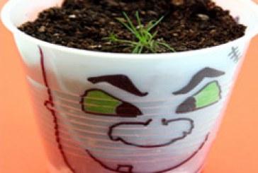 کاشت گیاه در لیوان پلاستیکی