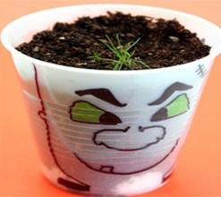 گیاه در لیوان پلاستیکی