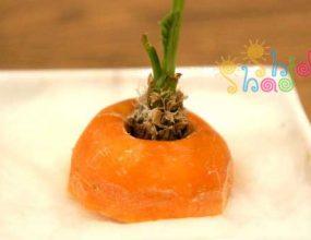 کاشت-و-رشد گیاه