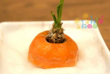 کاشت و رشد سر هویج