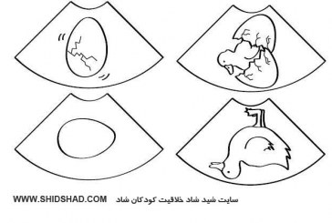 کاربرگ چرخه زندگی حیوانات