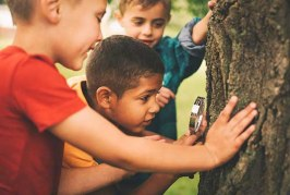 تحقیق در مورد علوم زیست شناسی درختان در طبیعت