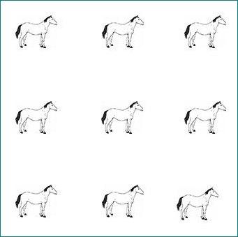 اسب تست هوش تست هوش جدا  اسب ها - shidshad.com mimplus.ir
